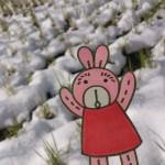 保護中: 雪の王国